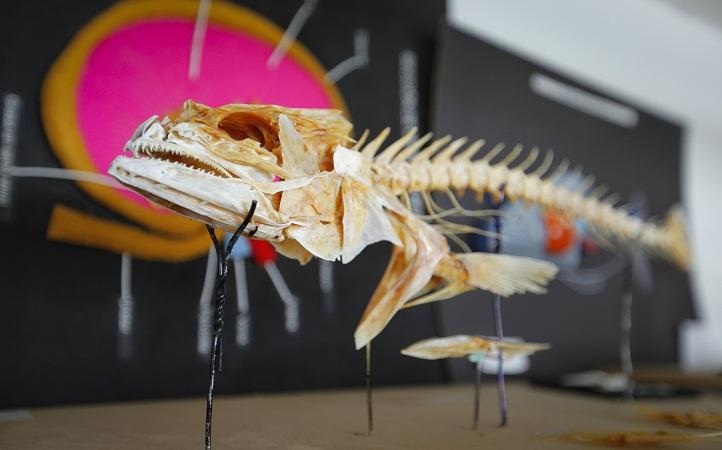 Crea la UAA modelos anatómicos para evitar experimentos científicos con animales