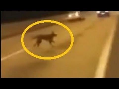 Perro se teletransporta para no ser atropellado VIDEO