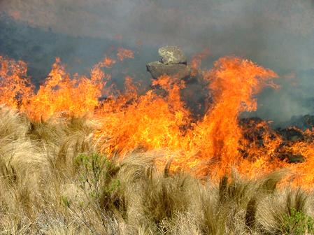 Insisten bomberos de Ags. que incendios han sido provocados por piromaníacos