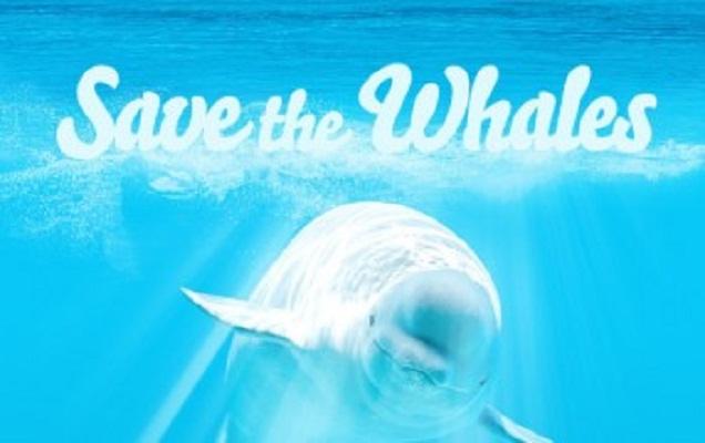 Ahora podrás ayudar a salvar ballenas viendo videos pornográficos