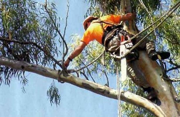 Crece 23.4% índice de supervivencia de árboles plantados entre 2013 y 2014
