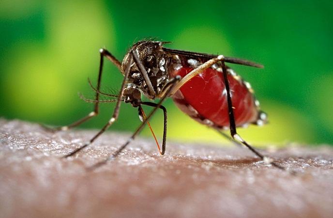 Descubren científicos la estructura del virus del Zika