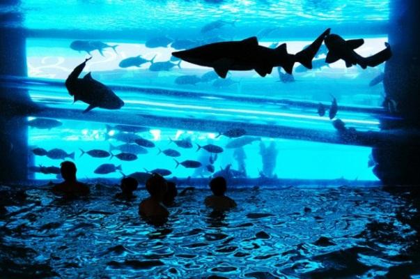 Exponen tiburones de forma ilícita en la FNSM