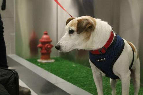 Aeropuerto de NY inaugura baño para mascotas