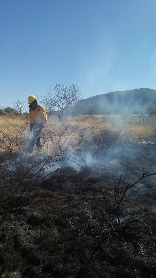 40 nuevos brigadistas en zonas rurales de Ags. para mitigar incendios forestales