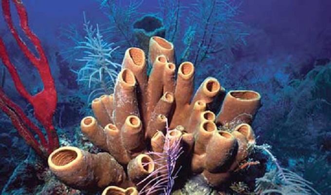 Animales marinos podrían sobrevivir a un Apocalipsis