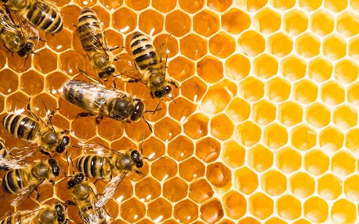 Insecticidas están acabando con las especies de abejas