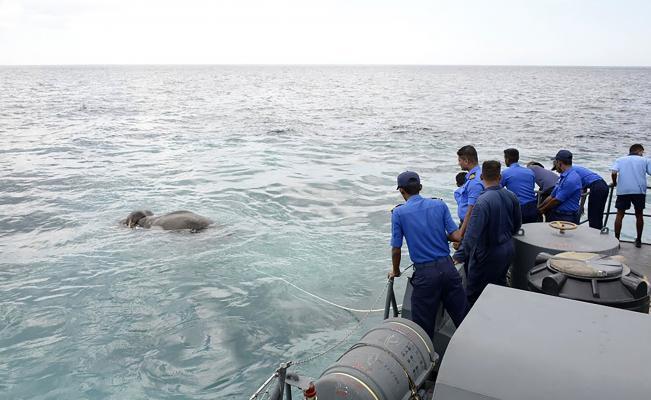 El impresionante rescate a un elefante que se ahogaba en el mar