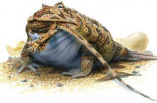 Descubren rana gigante que era capaz de devorar dinosaurios