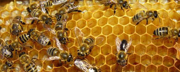 Se disminuye la producción de miel en El Llano a causa del cambio climático