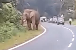 Elefante mata persona cuando intentaba tomarse selfie