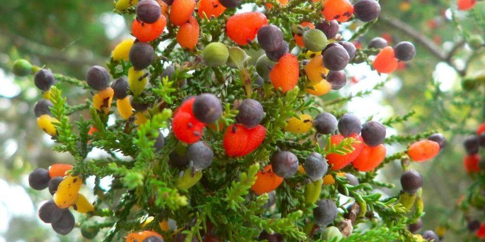 Un árbol que da 40 tipos de frutas
