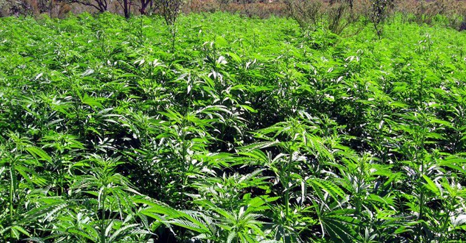 INEGI no investiga si narcos ocupan tierras de siembra licita: Santaella