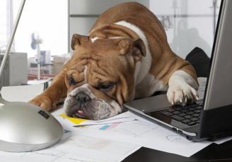 Beneficios de tener a tu mascota en el trabajo