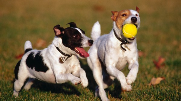 Detectan en EU enfermedad de perros que se transmite a humanos