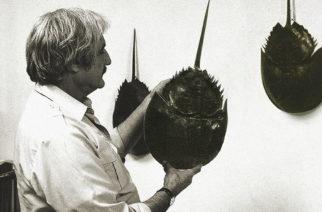 ICA invita a la inauguración de la exposición Limulus del artista Brian Nissen