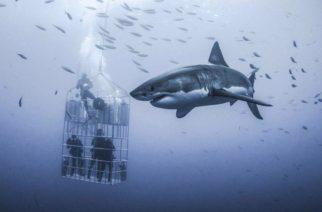 Fotografían tiburón blanco gigante en Baja California
