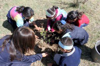 Plantan 100 árboles en el Arroyo de Los Cobos