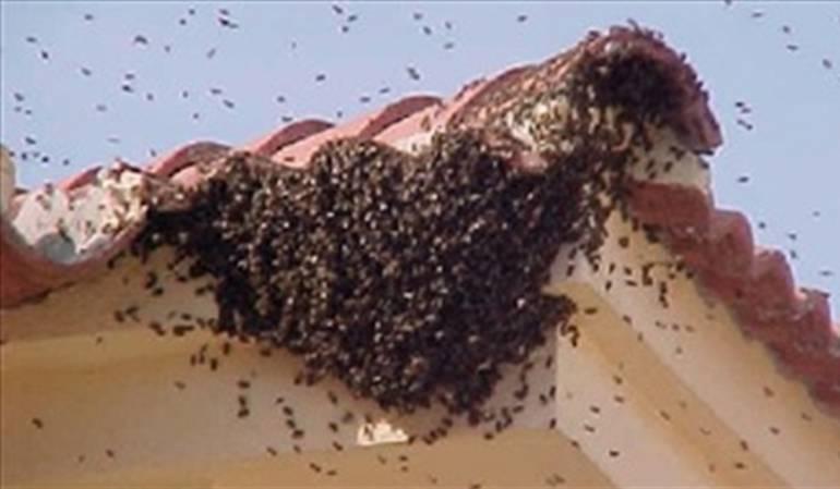 Atacan a abejas a niños de escuela primaria en Encarnación de Díaz, Jal.