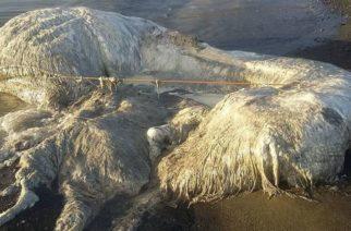 El hallazgo de una extraña criatura en una playa filipina causó pánico en una aldea