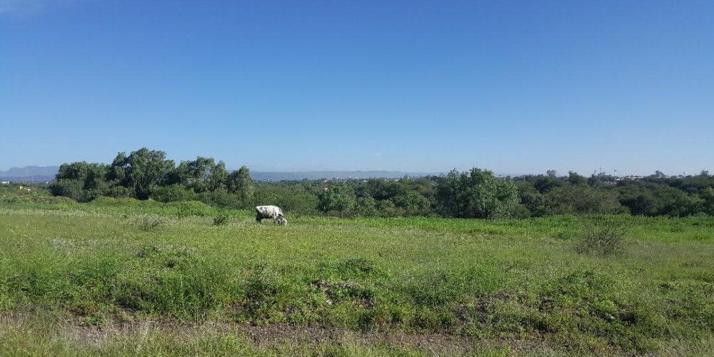 Denuncia PVEM que Semarnat planea otro ecocidio en Aguascalientes