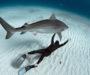 Lo arrestan por nadar en un tanque con tiburones