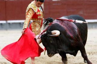 Formaliza PVEM lucha  contra corridas de toros y peleas de gallos en Ags