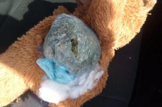 En Ags escondía marihuana en osito de peluche y lo detuvieron
