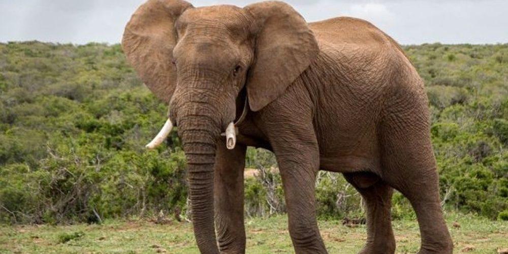 Hombre pierde la vida al tratar de hipnotizar a un elefante en Sri Lanka (Video)