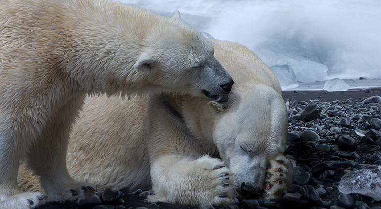 El Polo Norte esta alejándose de Canadá y nadie sabe porqué