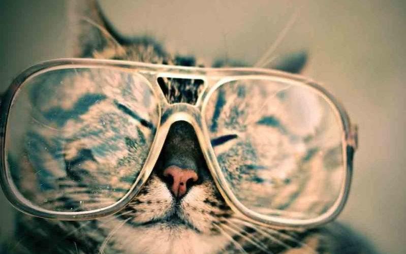 Hoy es Día Internacional del gato, ¿por qué se celebra?