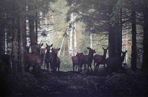 Buscan cura para enfermedad del ciervo zombie antes que llegue a humanos