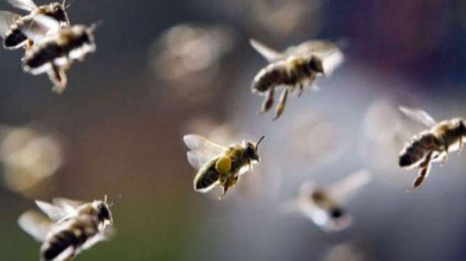Enjambre de abejas pica a 7 personas en Aguascalientes
