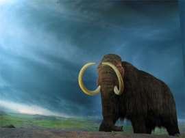 Activan células de mamut; ven poco probable la clonación