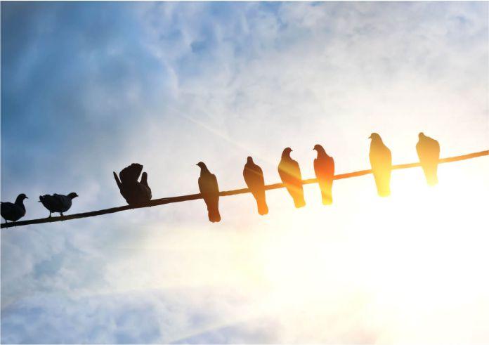 Es por esto que las aves no se electrocutan sobre las líneas eléctricas