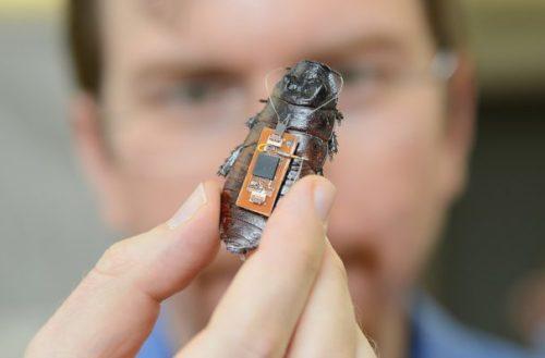Cybug, la era de los insectos robot