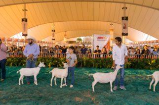 Se presenta la XXX Exposición Regional de Caprinos en la FNSM