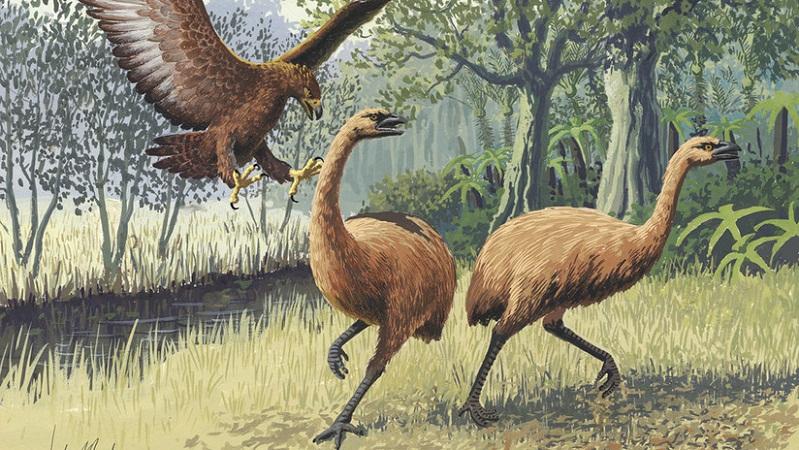 Sacó a pasear a su perro y encontró restos de un ave gigante extinta