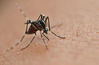 Mira este tip contra las picaduras de mosquito