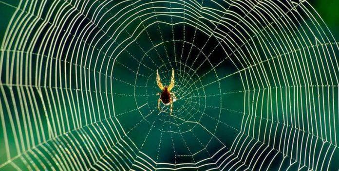La tela de araña tiene uso medicinal