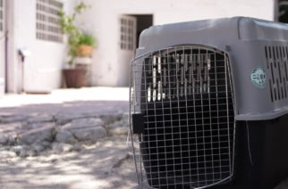 Concluye campaña de esterilización de mascotas el Ayuntamiento de Pabellón