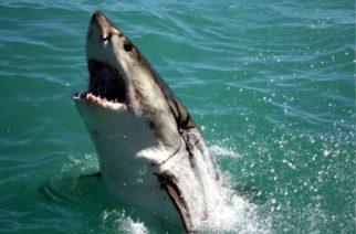 Hay una criatura capaz de atemorizar a un tiburón y es esta