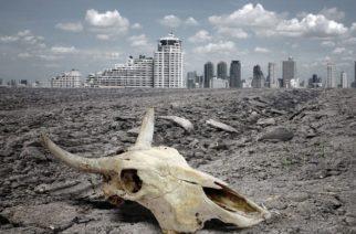 Prevén extinción masiva de especies animales en el mundo