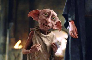 Graban a misteriosa criatura y lo comparan con 'Dobby'