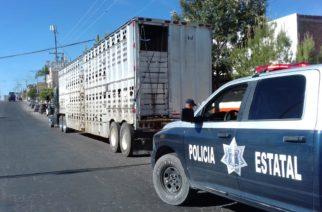 Intensifica la SSPE vigilancia en comunidades para evitar robo de ganado