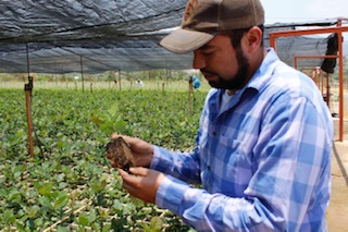 En Aguascalientes invierte Conafor 5.2 mdp en restauración forestal