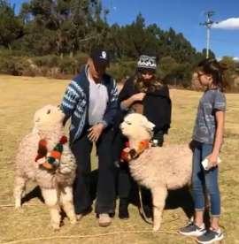 Alpaca escupe a Sergio Mayer por intentar tomarse una foto