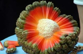 Conoce la fruta más rara y exótica del mundo