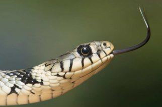 Serpiente ataca a hombre, él responde con mordidas y ambos mueren