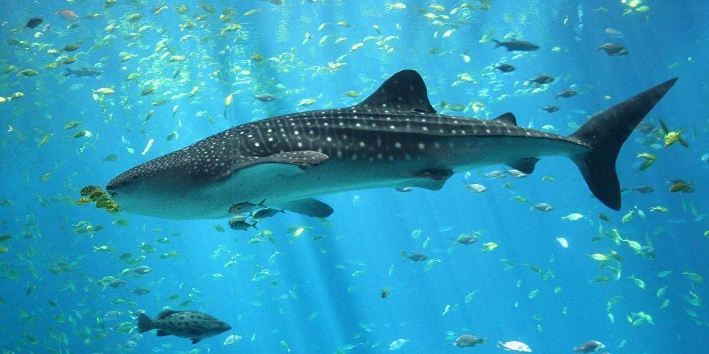 (Video) Tiburón prehistórico emerge de las profundidades y ataca un submarino